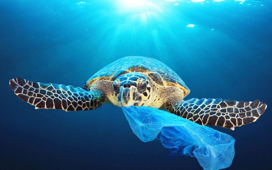 #12 Çevre Sorunlarına Çözüm Bulurken İş Haline Gelen Girişim Ocean & Co
